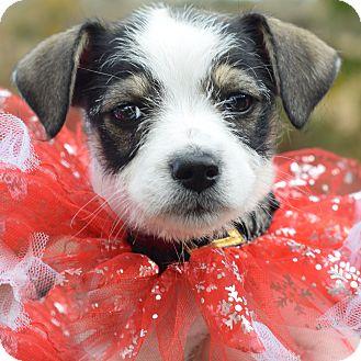 Small Dogs For Adoption Denver