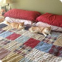 Adopt A Pet :: DAISY & ANTONIA - Scottsdale, AZ