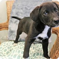Adopt A Pet :: Marlon - Bedminster, NJ