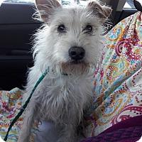 Adopt A Pet :: Happy - Las Vegas, NV