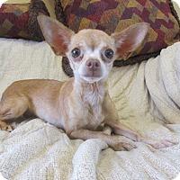 Adopt A Pet :: Tootsie - Ridgway, CO