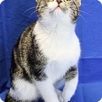 Adopt A Pet :: Sparkle - Winston-Salem, NC