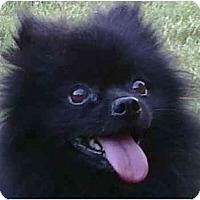 Adopt A Pet :: Dusty - Gum Spring, VA