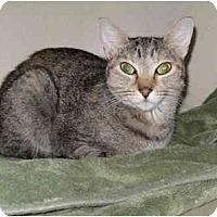 Adopt A Pet :: Paws - Mesa, AZ