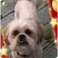 Adopt A Pet :: Everett - Staunton, VA