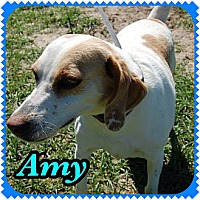 Adopt A Pet :: Amy - Williston, FL