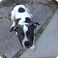 Adopt A Pet :: Aquila - San Diego, CA