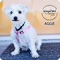 Adopt A Pet :: Aggie - Shawnee Mission, KS