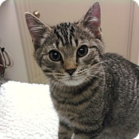 Adopt A Pet :: Jackson - Troy, OH
