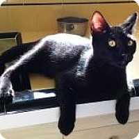 Adopt A Pet :: Pepper - Mission Viejo, CA