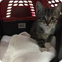 Adopt A Pet :: Gracie - Trinity, NC