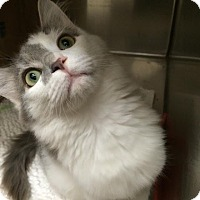 Adopt A Pet :: Tailbotton - McDonough, GA