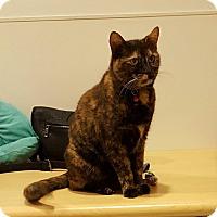 Adopt A Pet :: Vivian Rose - Chicago, IL