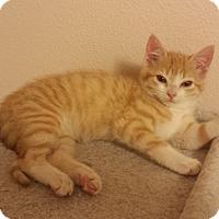 Adopt A Pet :: Winnie 2016 - Bentonville, AR