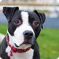 Adopt A Pet :: Jack (foster) - Portland, OR