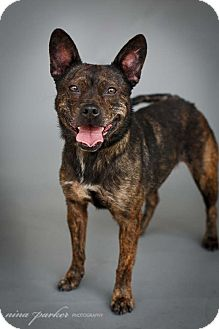 Cattle Dog Mix Dog for adoption in Marietta, Georgia - Meadow