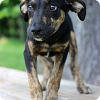 Adopt A Pet :: Heidi - Waldorf, MD