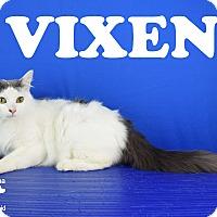 Adopt A Pet :: Vixen - Carencro, LA