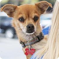 Adopt A Pet :: Tulip - San Diego, CA
