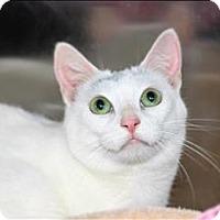 Adopt A Pet :: Alice - San Luis Obispo, CA