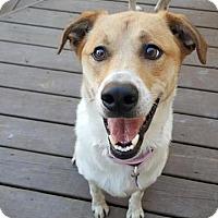 Labrador Retriever Mix Dog for adoption in Glen Burnie, Maryland - Wanda - ON HOLD - NO MORE APPLICATIONS