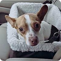 Adopt A Pet :: Skip - Grafton, WI