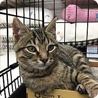 Adopt A Pet :: Cummins - Cincinnati, OH