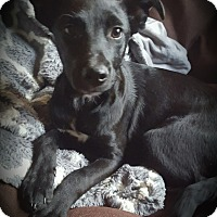 Adopt A Pet :: Mindy - Cleveland, OH