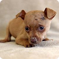 Adopt A Pet :: Bubbles - Waldorf, MD