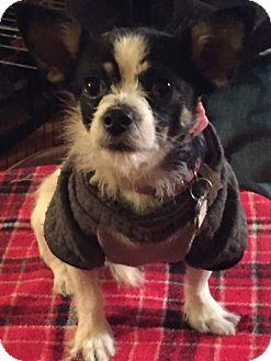 Terrier (Unknown Type, Medium) Mix Dog for adoption in Providence, Rhode Island - Jessie in RI