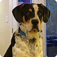 Adopt A Pet :: Otto Von Bismarck - Virginia Beach, VA
