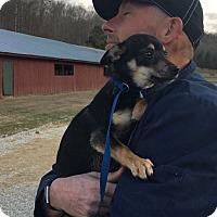Adopt A Pet :: Pixel - Harrisonburg, VA