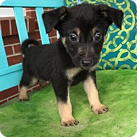 Adopt A Pet :: Paradise - Staunton, VA