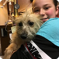 Adopt A Pet :: August - Harmony, Glocester, RI