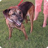 Adopt A Pet :: Nikki - Scottsdale, AZ