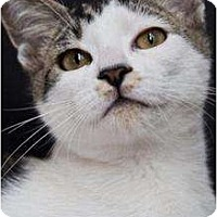 Adopt A Pet :: Smudge - Wayne, NJ