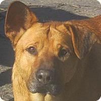 Adopt A Pet :: Jack - Jacksonville, FL