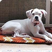 Adopt A Pet :: Rita - Providence, RI