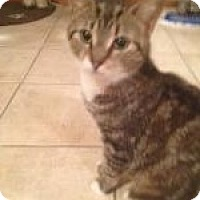 Adopt A Pet :: Savannah - East Hanover, NJ