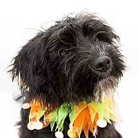 Adopt A Pet :: Walter - Cumberland, MD