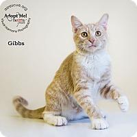 Adopt A Pet :: Gibbs - Phoenix, AZ