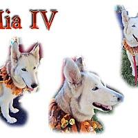 Adopt A Pet :: Mia IV - Seminole, FL