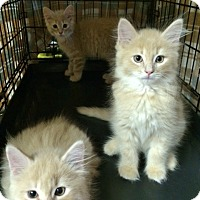 Adopt A Pet :: Deacon - Byron Center, MI