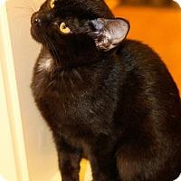 Adopt A Pet :: Christie - Overland Park, KS