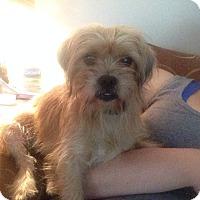 Adopt A Pet :: Nae Nae - Hazard, KY