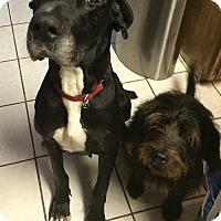 Adopt A Pet :: Phoebe (Rehab) - Memphis, TN
