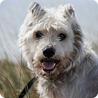 Adopt A Pet :: Luke - San Francisco, CA