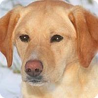 Adopt A Pet :: KALI(OUR