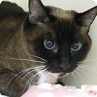 Adopt A Pet :: CHIQUITA - Brea, CA
