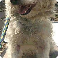 Adopt A Pet :: George-ADOPTION PENDING - Boulder, CO